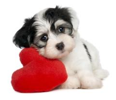 amor verdadero tu mascota