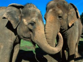 amor verdadero los animales